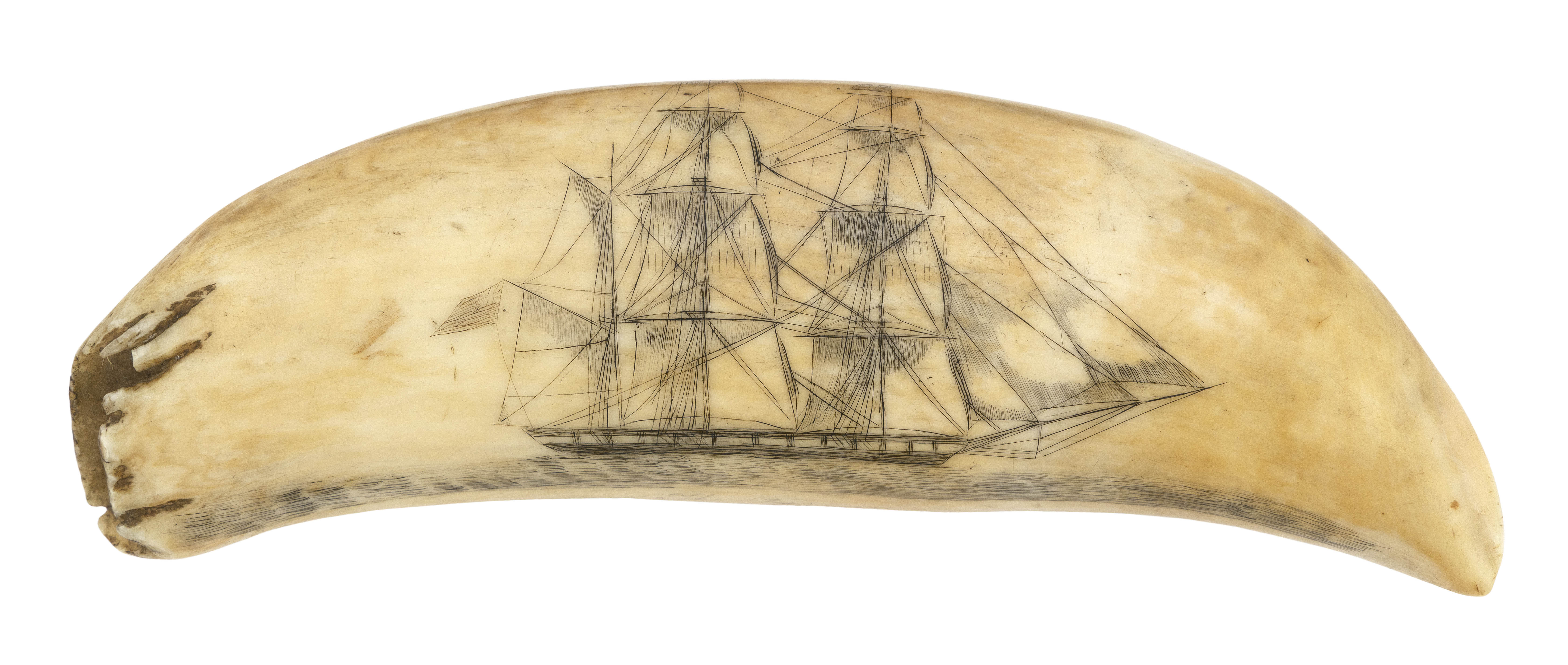 SCRIMSHAW WHALE'S TOOTH SOUTH DEPICTING